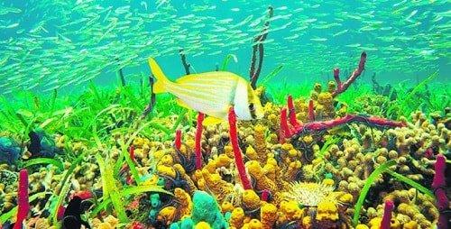 Corales en San Andres