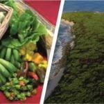 productos de la agricultura de la region insular