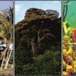 Flora de la region insular
