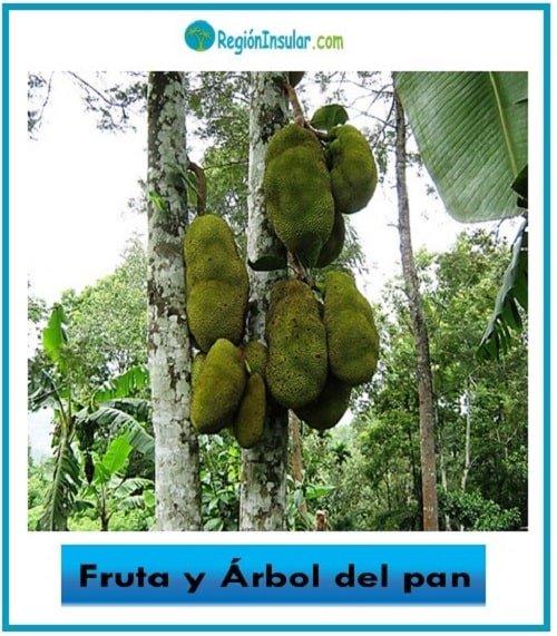 fruta de arbol del pan