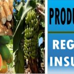 productos agricolas de la region insular